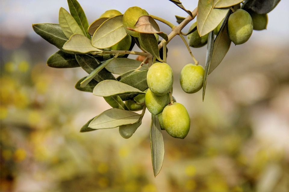 olio-euganeo-Vinitaly